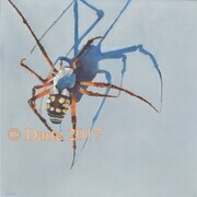 texas orb spider